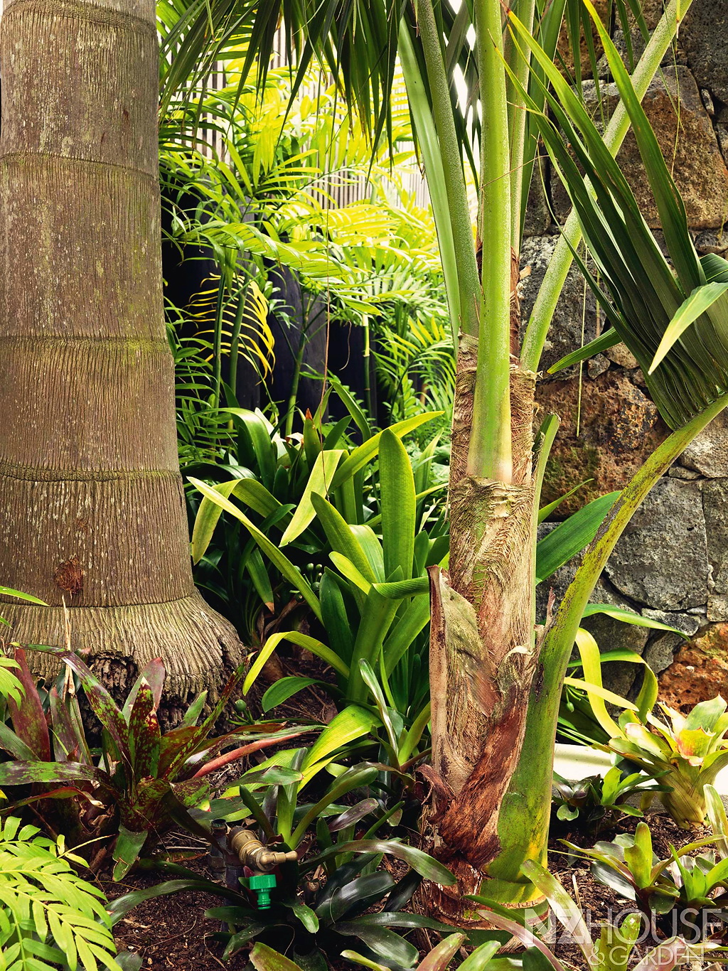 Tropical-courtyard-garden-8