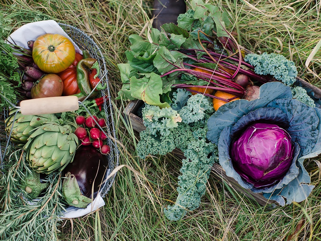 SMP-Living-Farm-to-Table-Fall-Dinner-4