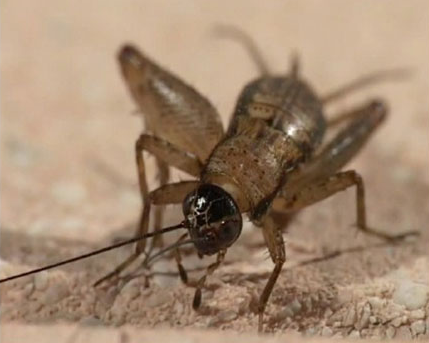 паразиты внутри человека видео hdmi