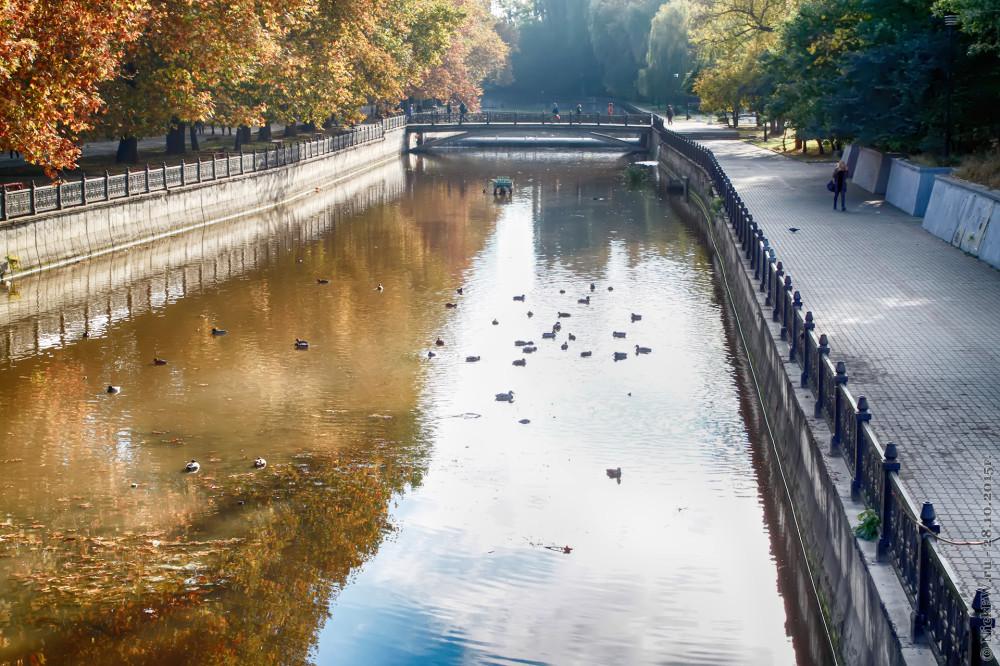 14. Кряквы на реке Салгир © NickFW.ru - 28.10.2015г.