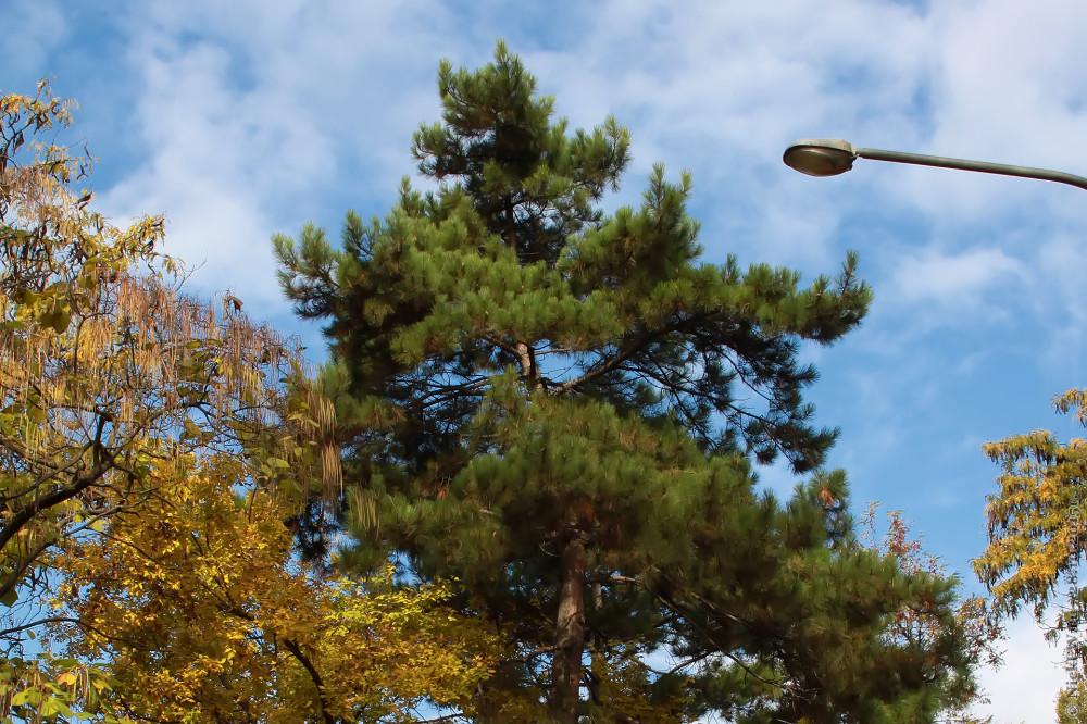 21. Деревья в сквере имени В.И.Ленина © NickFW.ru - 28.10.2015г.