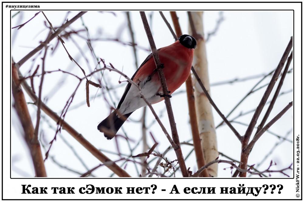 2. Мемчик со Снегирём - фото © NickFW.ru - 22.03.2018г.