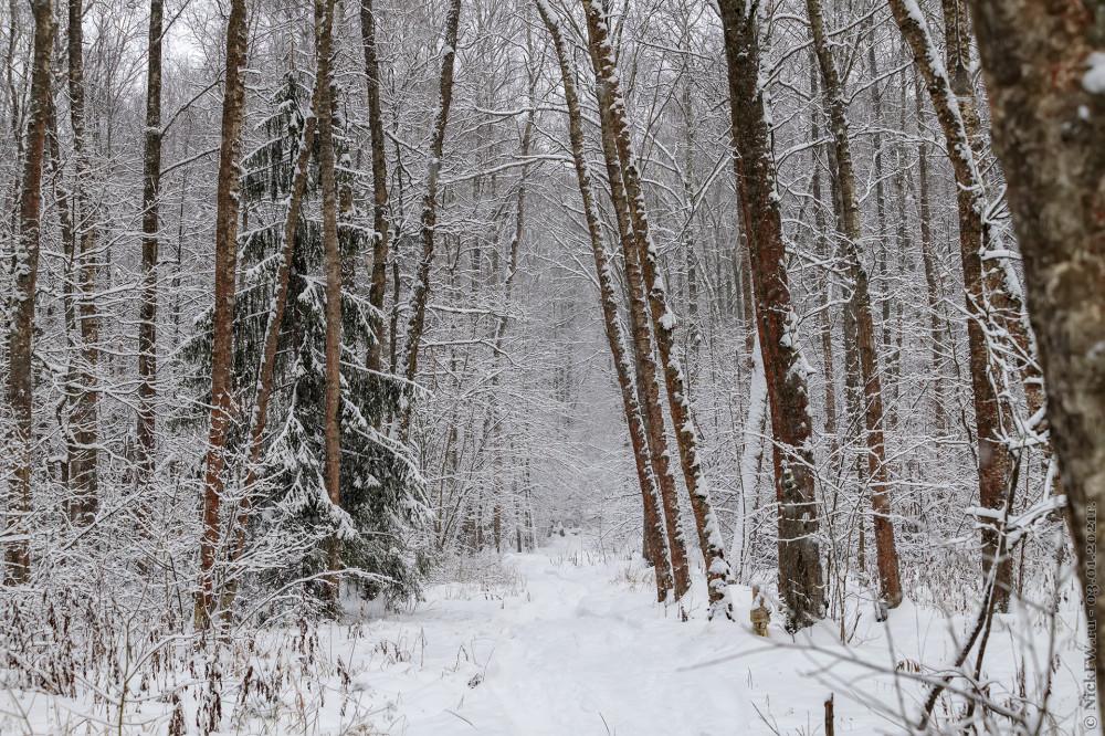 1. Зима в Ульяновском лесопарке © NickFW.ru - 03.01.2021г.