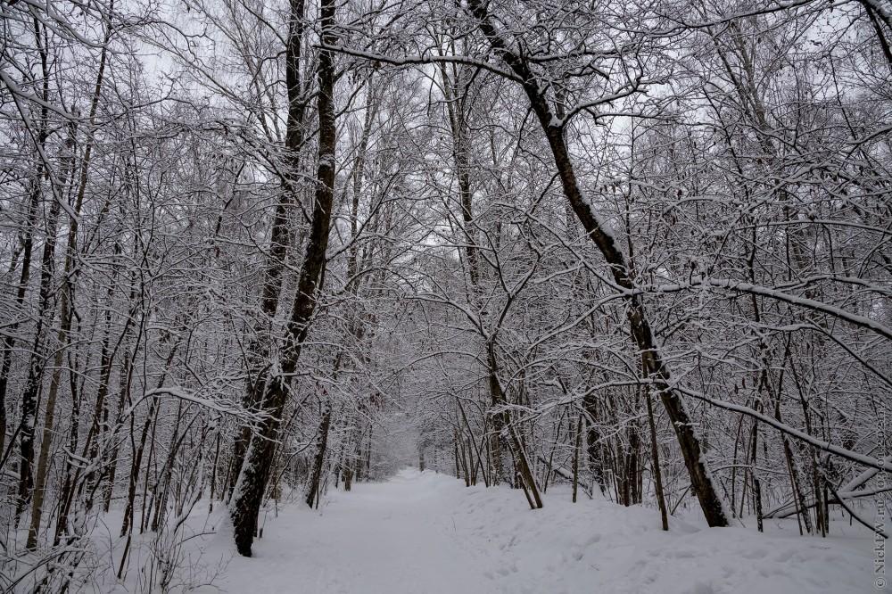 2. Зима в Ульяновском лесопарке © NickFW.ru - 03.01.2021г.