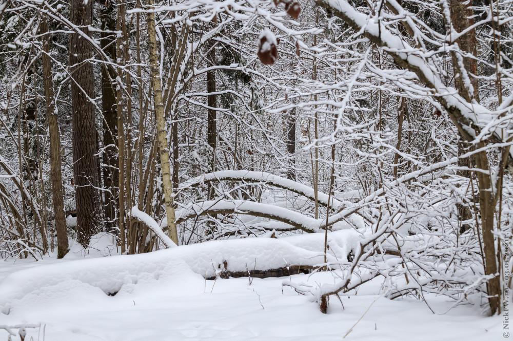 3. Зима в Ульяновском лесопарке © NickFW.ru - 03.01.2021г.