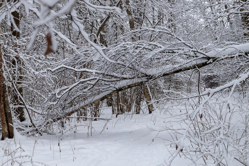 6. Зима в Ульяновском лесопарке © NickFW.ru - 03.01.2021г.