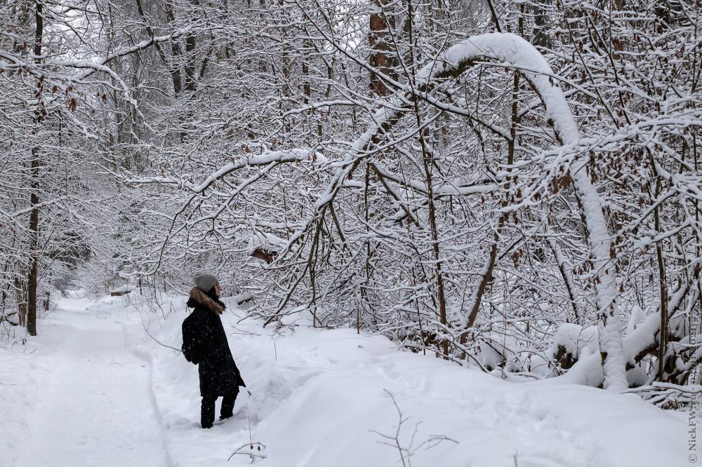 7. Доча в Ульяновском лесопарке © NickFW.ru - 03.01.2021г.