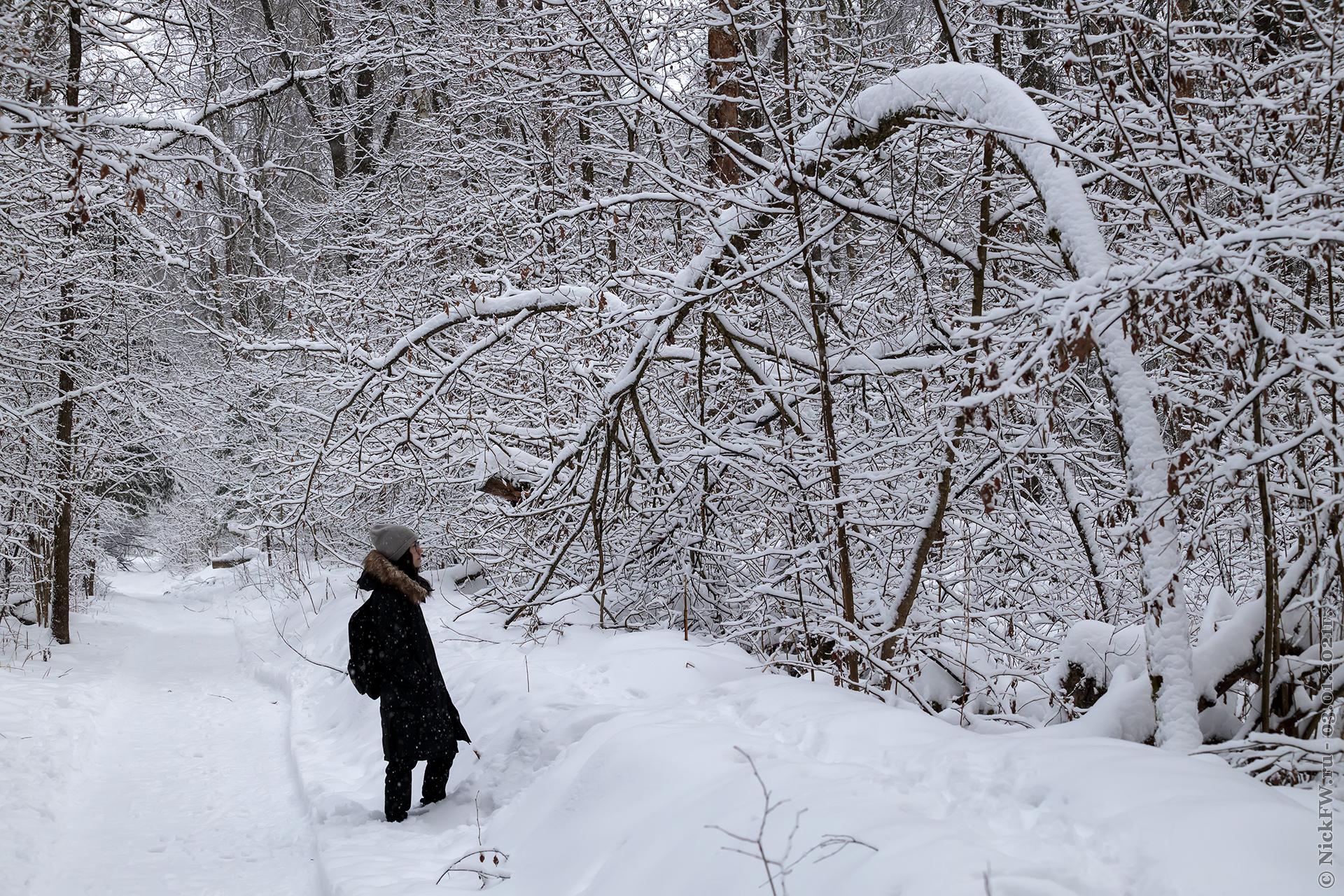 13. Доча в Ульяновском лесопарке © NickFW.ru - 03.01.2021г.