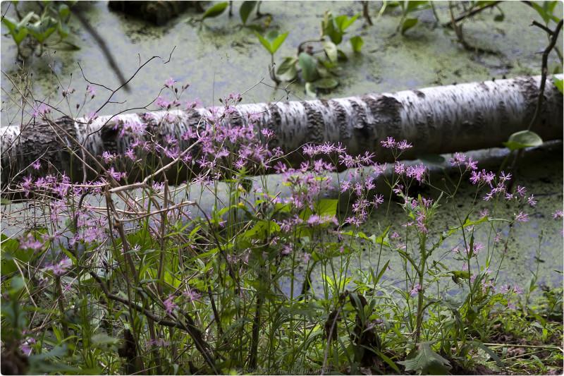 4. Прибрежные цветы © NickFW.ru - 09.06.2019г.