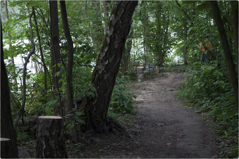 11. Тропа и чурбаки © NickFW.ru - 09.06.2019г.