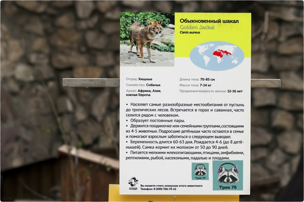 4. Шакал в Московском зоопарке - Табличка © NickFW.ru - 17.11.2018г.