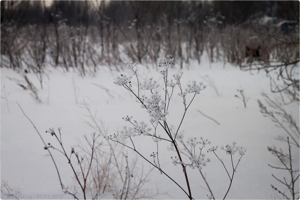 3. Морозная трава [© NickFW.ru - 01.01.2019г.]