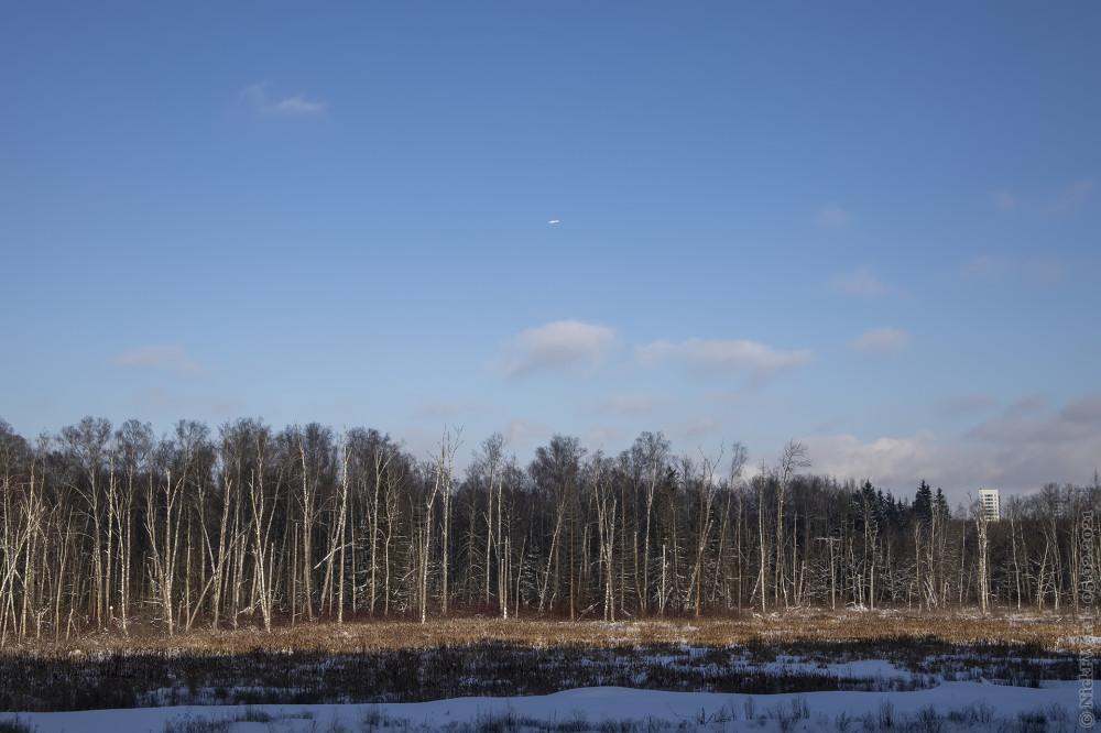 1. Вид из окна на Ульяновский лесопарк © NickFW.ru — 05.02.2021г.