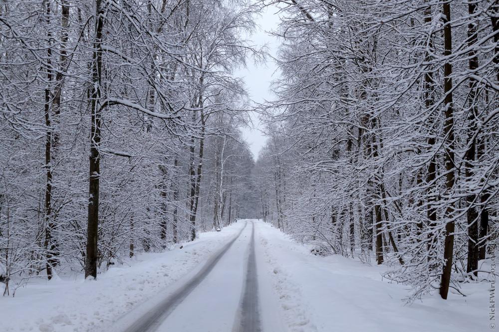 1. Ульяновский лесопарк © NickFW.ru — 03.01.2021г.