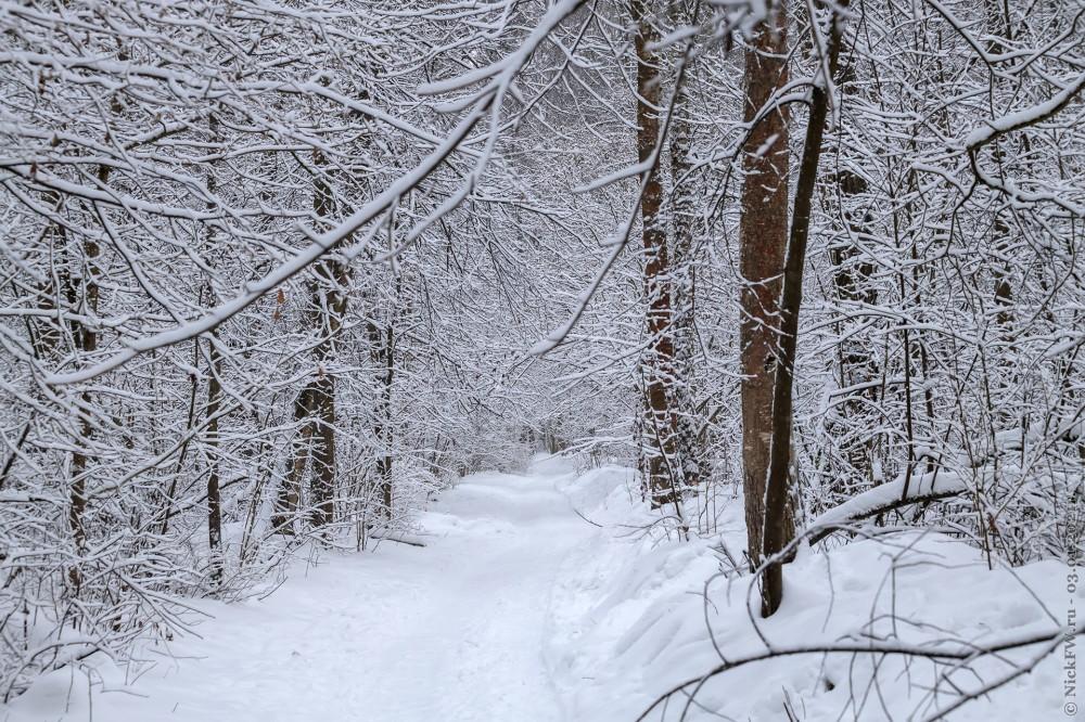 3. Ульяновский лесопарк © NickFW.ru — 03.01.2021г.