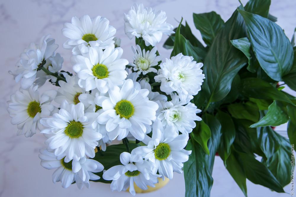 2. Хризантемы © NickFW.ru — 08.03.2021г.