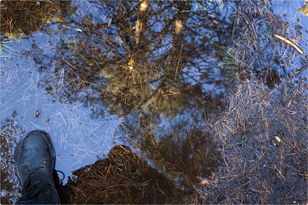 12. Отражение меня и неба в луже на тропе в Рудничном бору © NickFW.ru - 22.04.2019г.