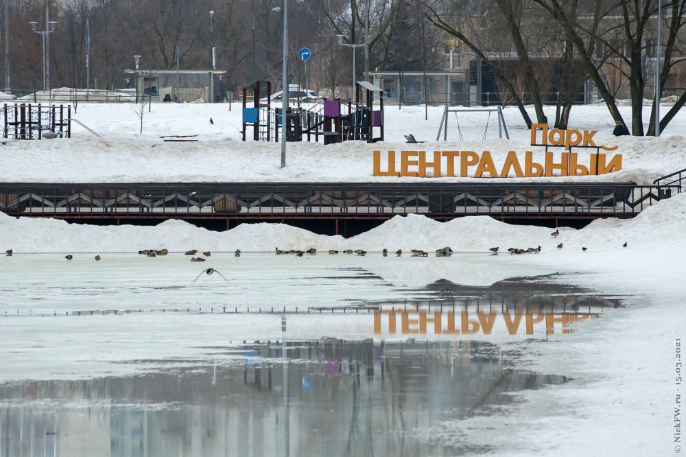 6. Парк Центральный и кряквы в лужах на пруду © NickFW.ru — 15.03.2021г.
