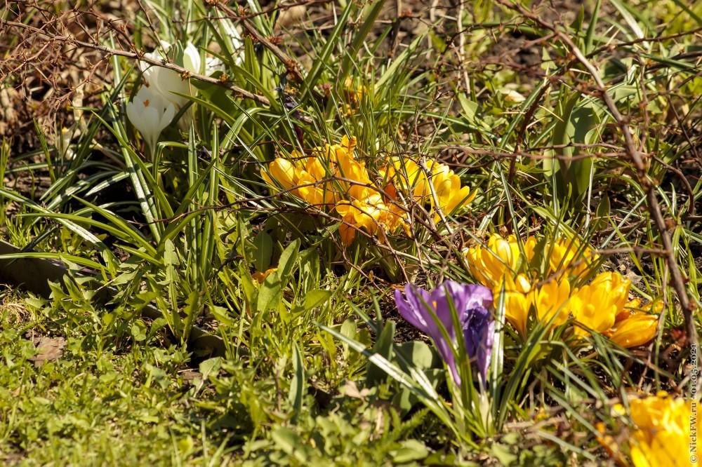 2. Цветы из Парка Победы © NickFW.ru — 01.05.2021г.