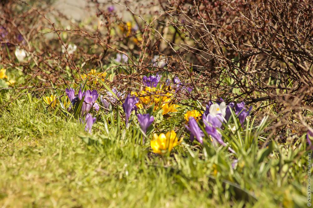 3. Цветы из Парка Победы © NickFW.ru — 01.05.2021г.