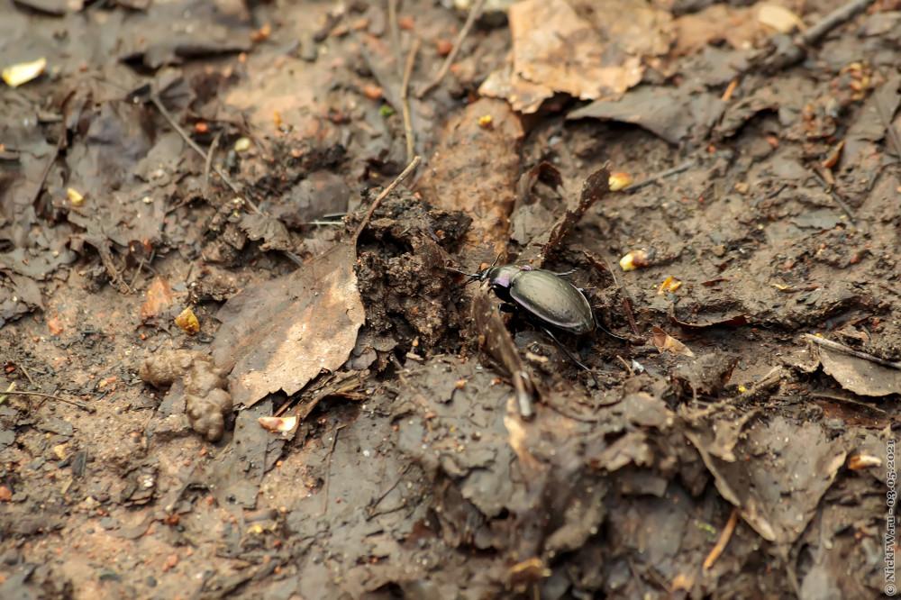 5. Чёрный жук © NickfW.ru — 03.05.2021г.