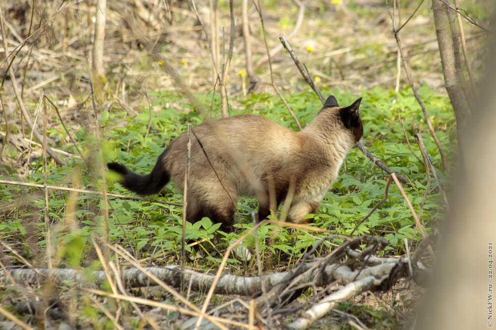 2. Кот в Мещерском парке © NickFW.ru — 22.04.2021г.