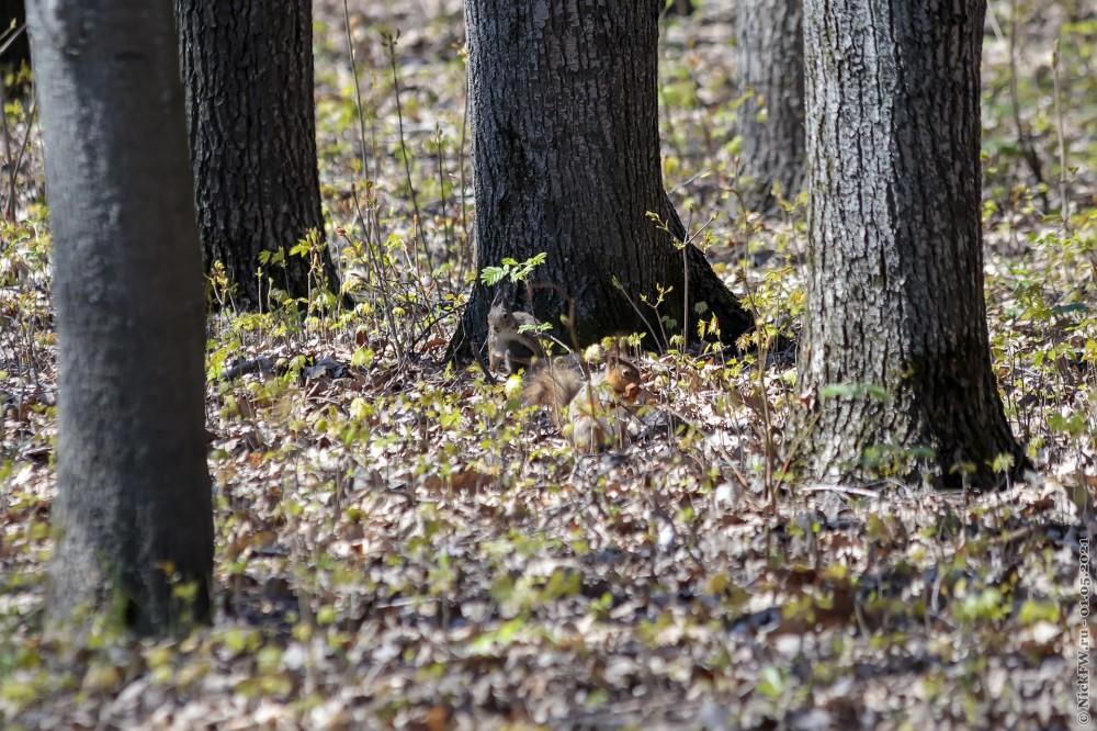 3 Белка © NickFW.ru — 01.05.2021г.