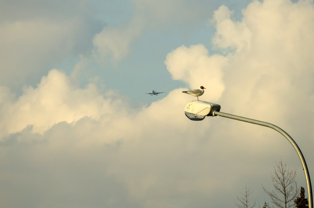 3. Airbus A319-111 - №: VP-BWJ и чайка на фонарном столбе —  © NickFW.ru — 12.06.2021г.