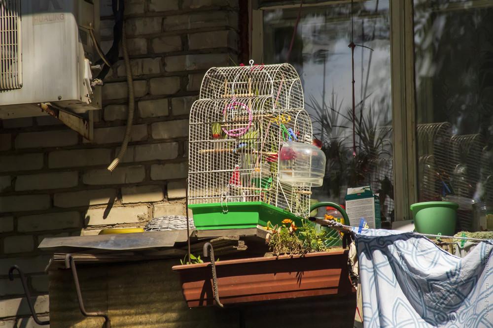 Птицы в клетке... © NickFW.ru — 16.07.2021г.