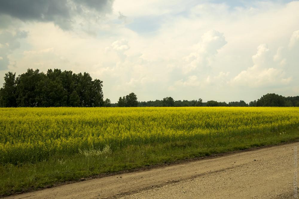 4. Цветущие поля © NickFW.ru — 06.07.2021г.