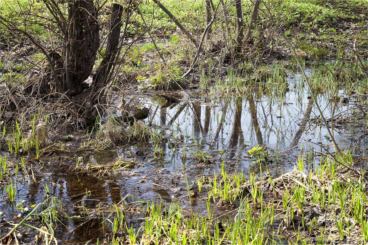 Молодая зелень у ручья [© NickFW - 06.05.2017]