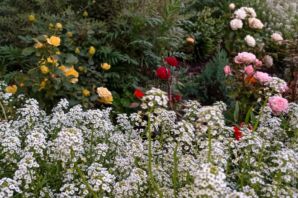цветочки © NickFW.ru — 09.08.2021г.