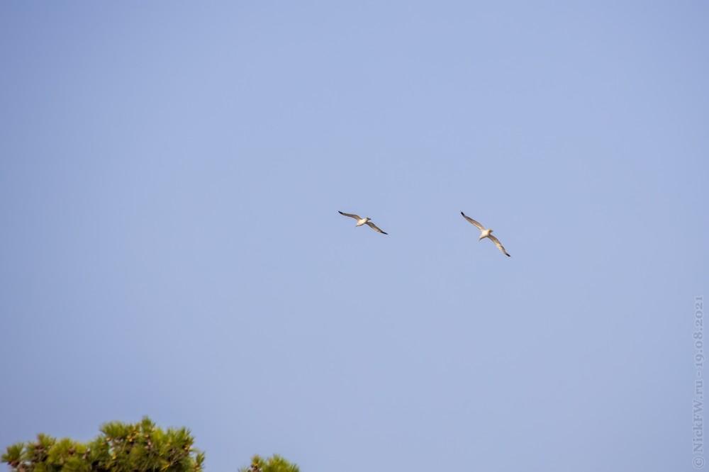 3. Чайки © NickFW.ru — 18.08.2021г.