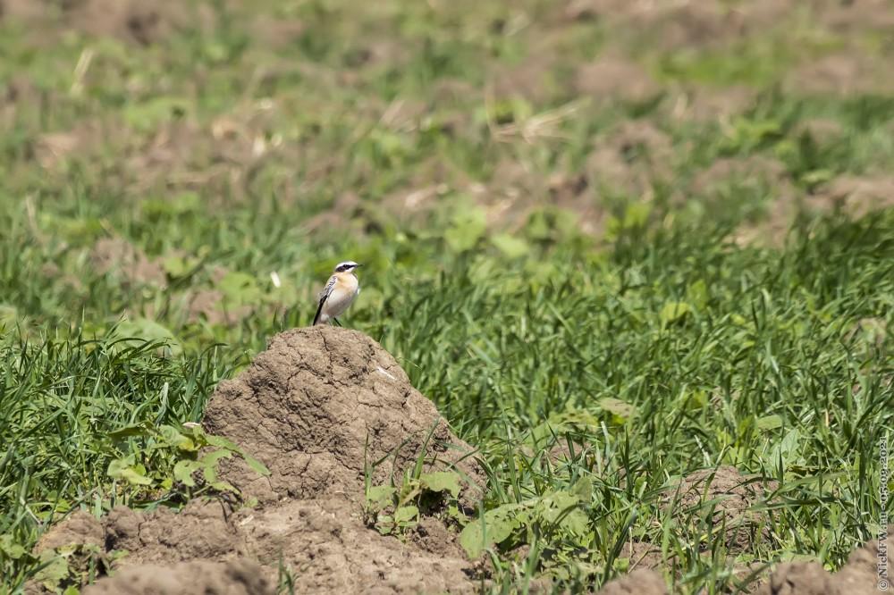 4. какая-то пташка... © NickFW.ru — 05.09.2021г.