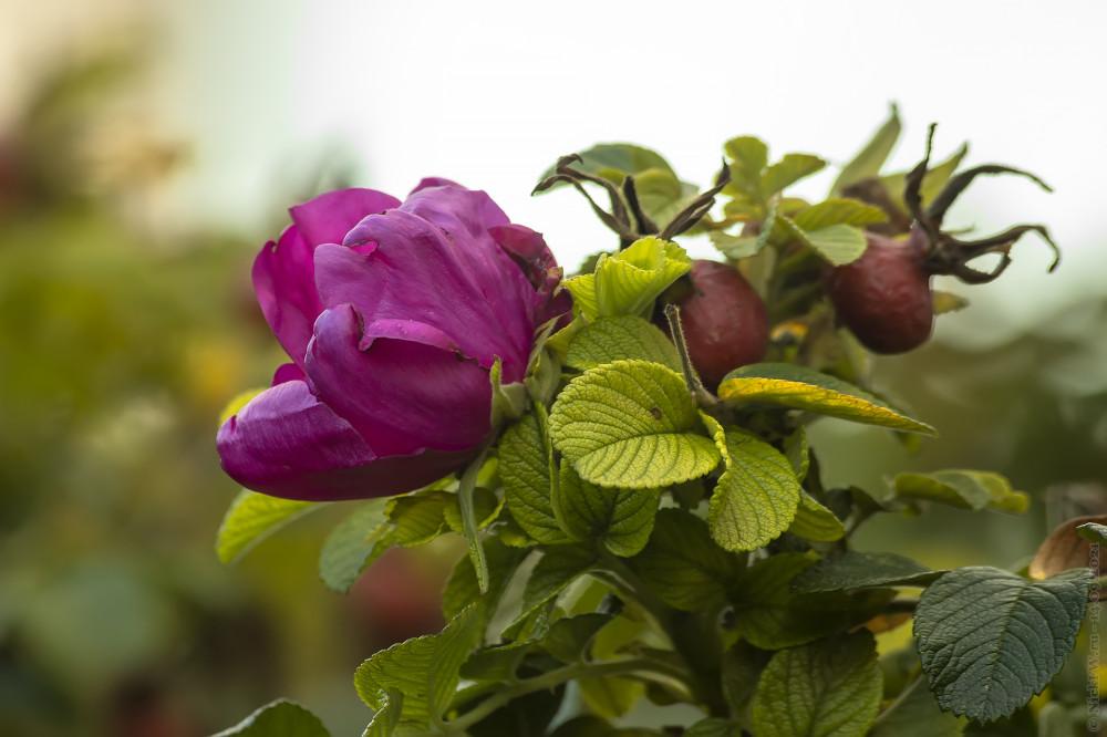 И ягодки и цветочки © NickFW.ru — 14.09.2021г.