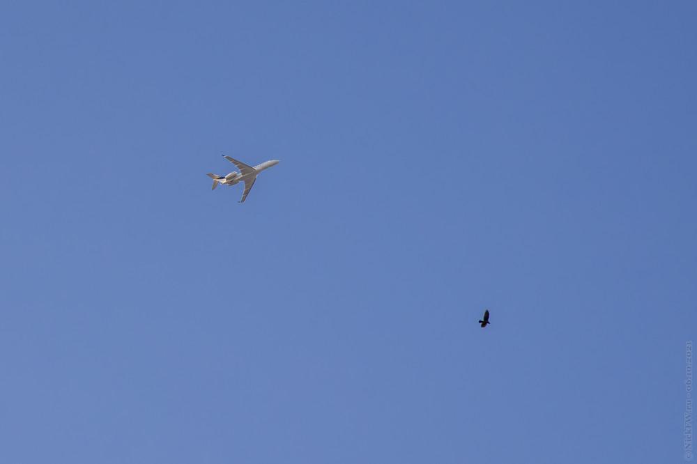2 птицы... © NickFW.ru — 06.10.2021г.