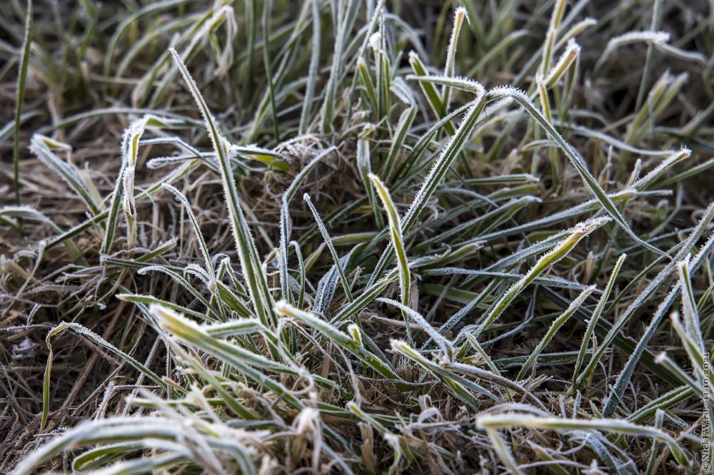 1. Трава в инее © NickFW.ru — 11.10.2021г.