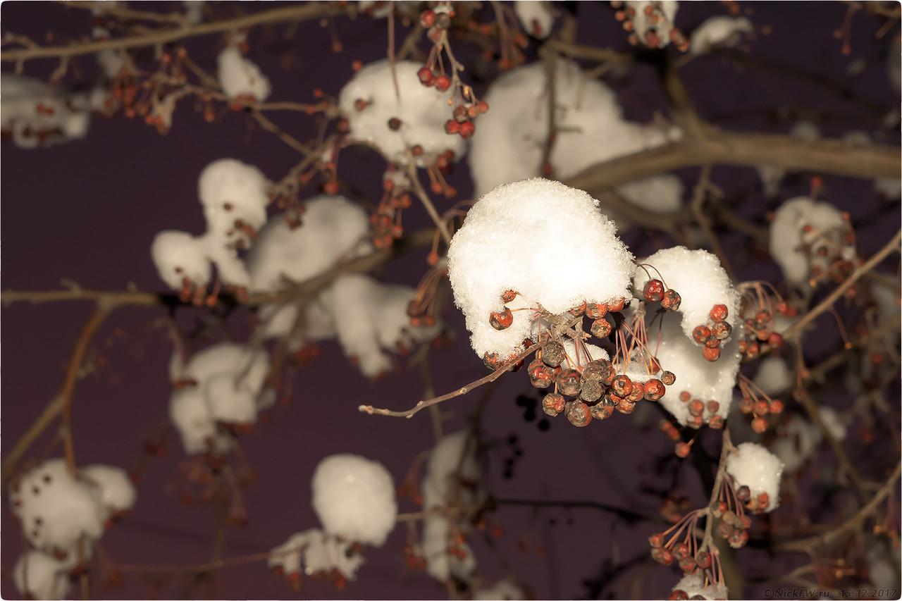 Ранетки в снегу [© NickFW - 15.12.2017]