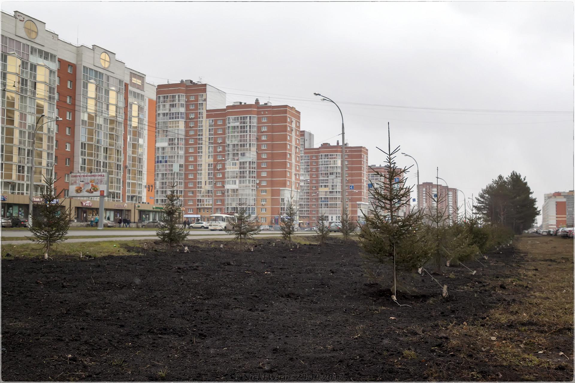 Ели на Шахтеров [© NickFW - 29.10.2017]