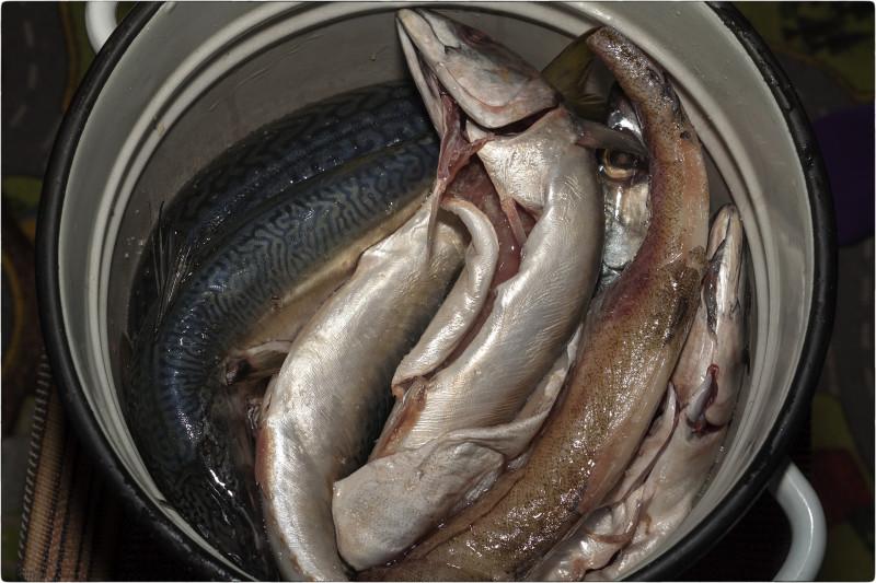 3. Засолка рыбы [© Nickfw.ru - 04.08.2017]