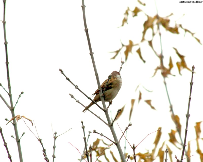 © NickFW 2009-10-16 Осень холод воробьи - 1
