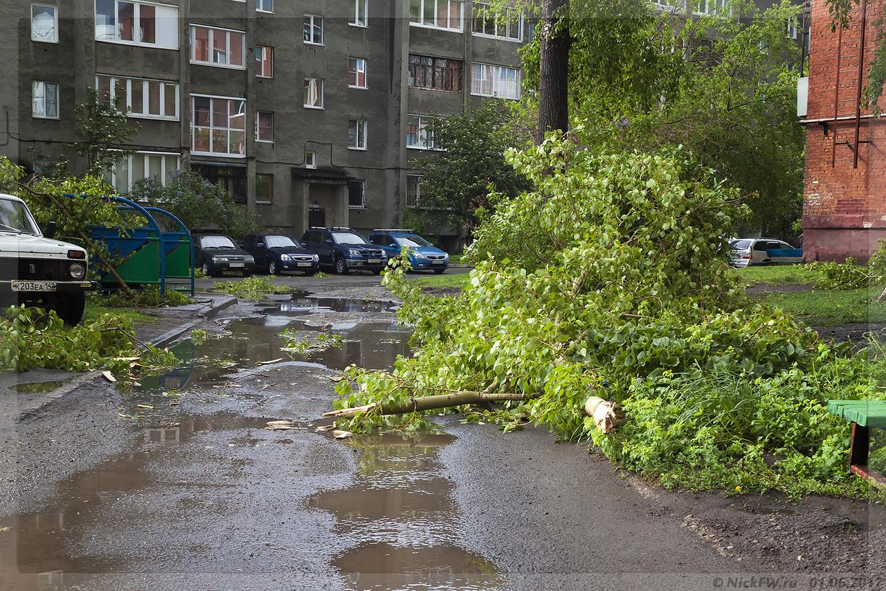 Тополиные ветви во дворе пр.Шахтеров 59 (© NickFW - 01.06.2017)