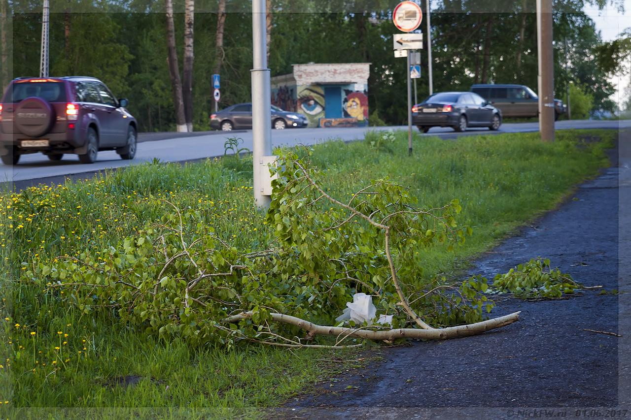 Упавшая ветка тополя на ул.Ракитянского (© NickFW - 01.06.2017)