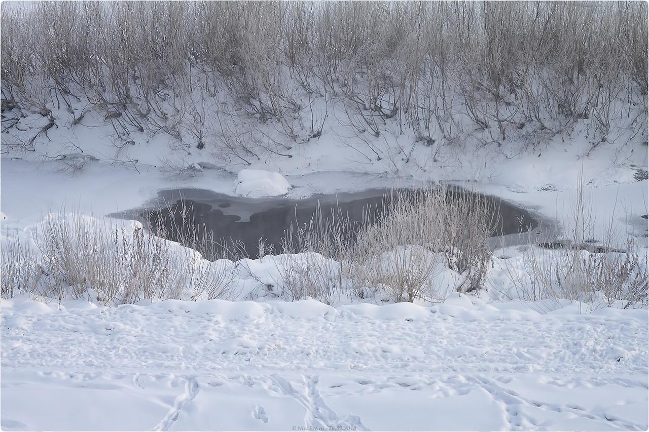 Полынья в устье Искитимки [© NickFW.ru - 28.02.2018]