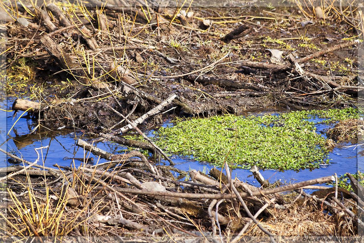 Весенняя зелень в ручейке (© NickFW - 01.04.2017)