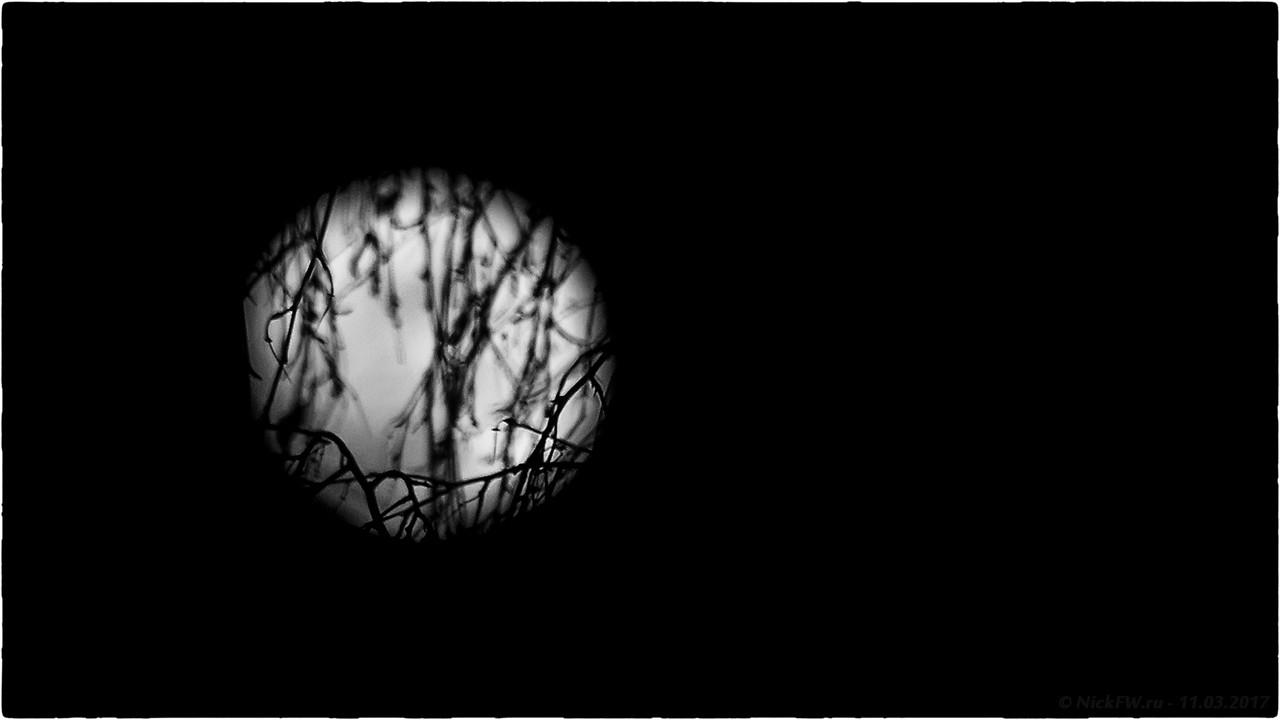 Берёзовые ветви на фоне луны (© NickFW - 11.03.2017)