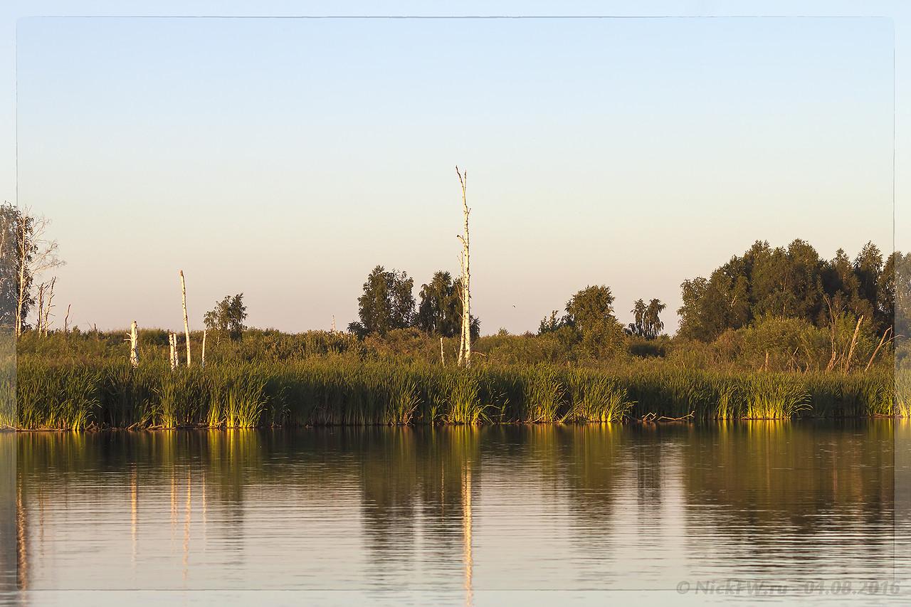 Сухостои в Улус-Мозжухинских водно-болотных угодьях (© NickFW - 04.08.2016)