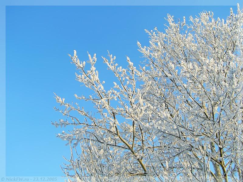 Небо ветви иней (© NickFW - 23.12.2005)