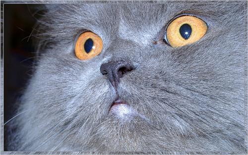 2002-04-29 Персидский кот