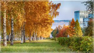 Берёзовая аллея на Волгоградской (© NickFW - 03.10.2015)